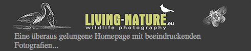 wildlife Fotografie